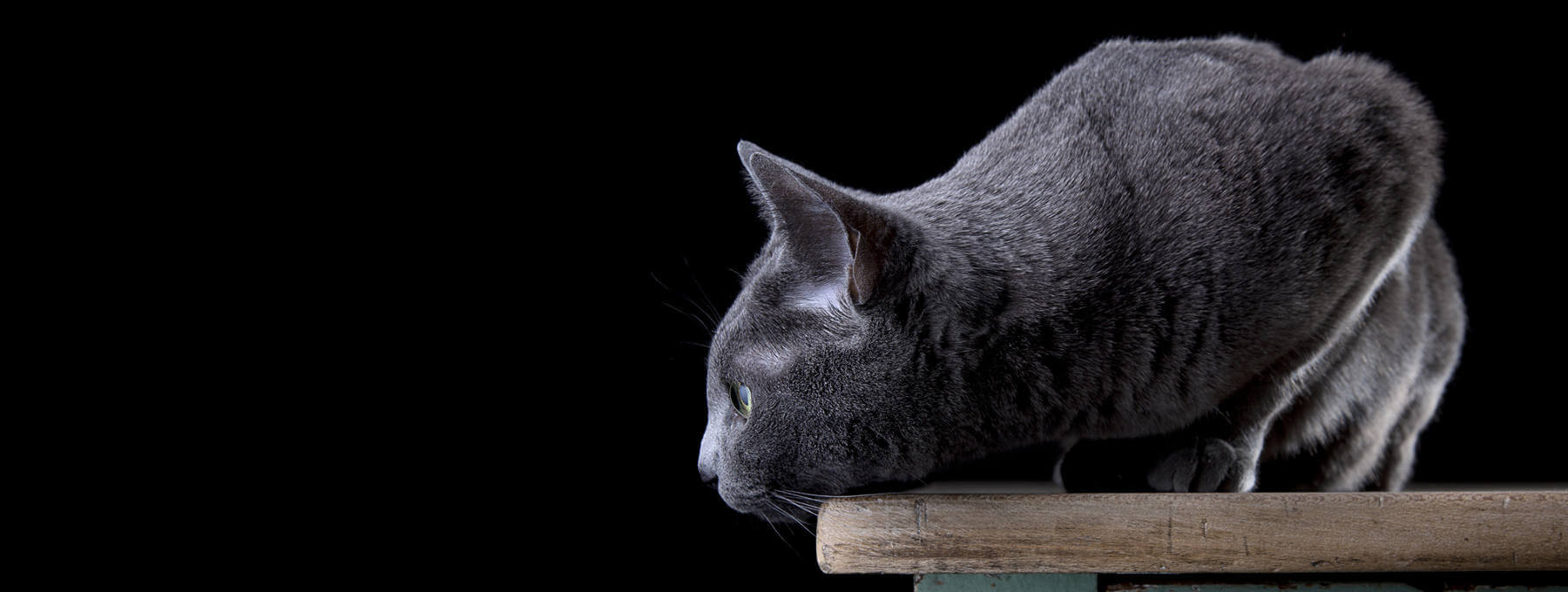 veterinaria-gato