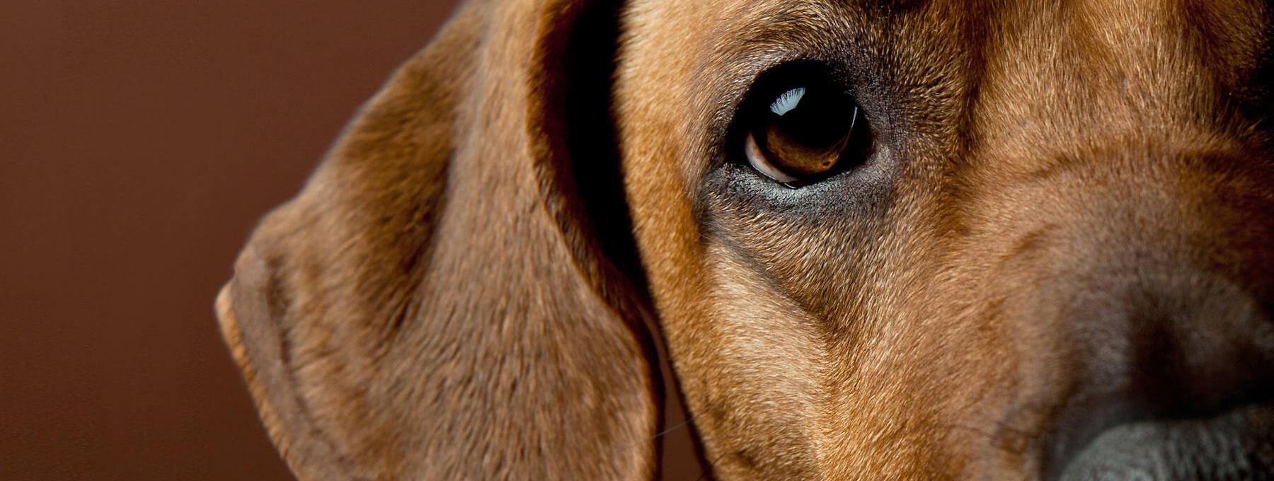 veterinaria-perro2